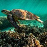"Unesko: Veliki koralni greben bi trebalo se nađe na listi ,,ugroženih"" 21"