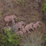 Životinje i Kina: Najduže putovanje slonova koje naučnici ne umeju da objasne 12