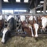 U čačanskim selima uginula 43 grla stoke, pretpostavlja se od visoke temperature vazduha 9