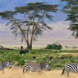 Afrika (1): Prizori iz čudesne divljine 14
