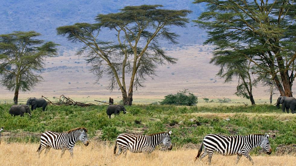 Afrika (1): Prizori iz čudesne divljine 1