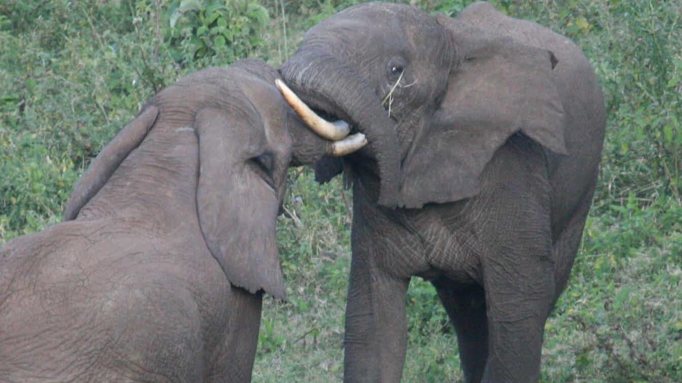 Afrika: (2) Među slonovima i lavovima 1