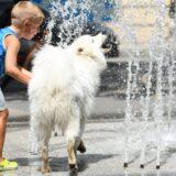 RHMZ: Do naredne srede u Srbiji temperatura do 42 stepena 10