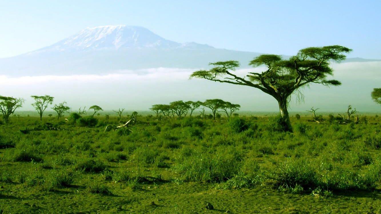 Afrika (3): Skriveni zvuci divljine 1