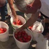 Protest poljoprivrednika u Leskovcu, delili građanima paradajz 11