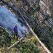 Srbija, priroda i požari: Zašto dolazi do šumskih požara 14
