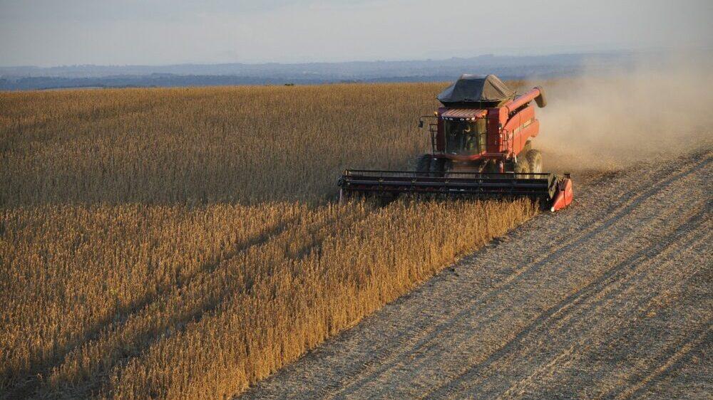 U Srbiji na 29 njiva pronađena GMO soja, uprkos zabrani gajenja 1