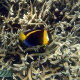 koralni greben