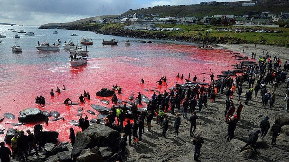 People gather in front of the sea, coloured red, during a pilot whale hunt in Torshavn, Faroe Islands