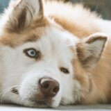 Šta je to ulcer rožnjače kod pasa i kako se leči? 12