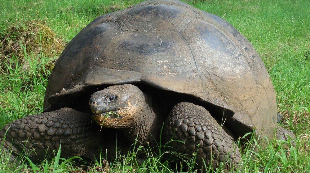 Ekvador (2): Šetnja sa kornjačama po Galapagosu 1