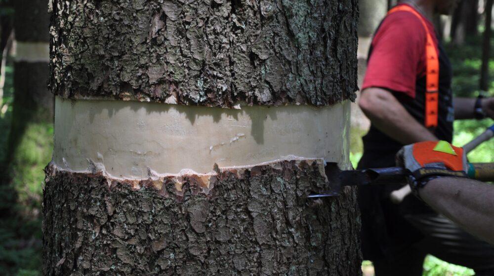 Kako prepoznati drveće pod stresom? 1