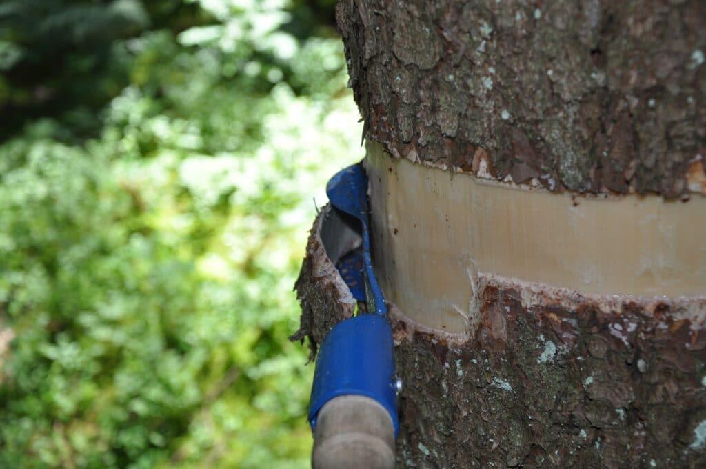 Kako prepoznati drveće pod stresom? 2