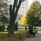 Sadnja 28 stabala u Tašmajdanskom parku 27 i 28. oktobra 11